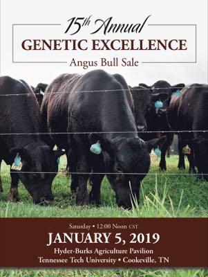 15th Annual Angus Bull Sale