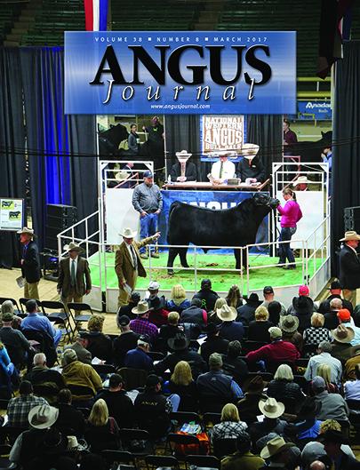 NWSS Bull Sale