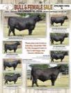 Jackson Angus Ranch/Star Creek Angus