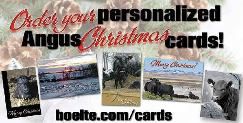 Angus Christmas-Cards