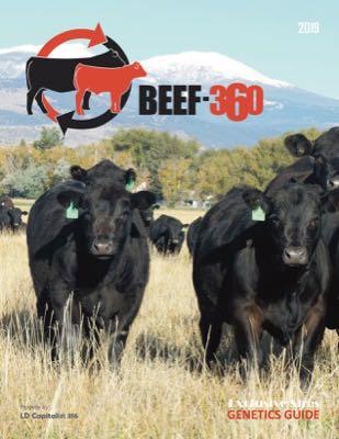 Beef-360