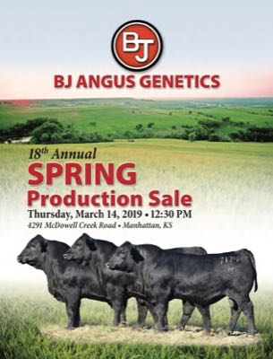BJ Angus Genetics