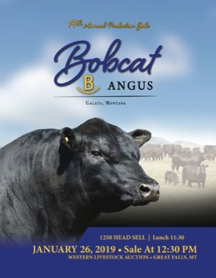 Bobcat Angus Production Sale