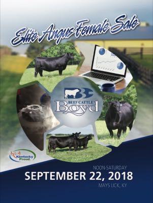 Boyd Beef Cattle