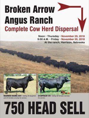 Broken Arrow Angus Ranch