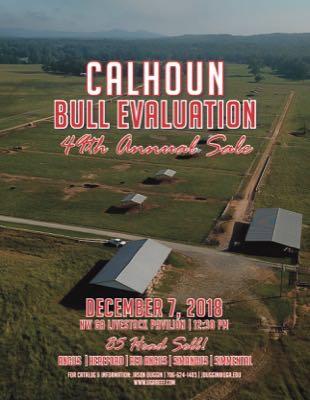 Calhoun Bull Evaluation