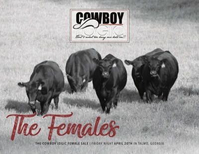 2nd Annual Bull Sale