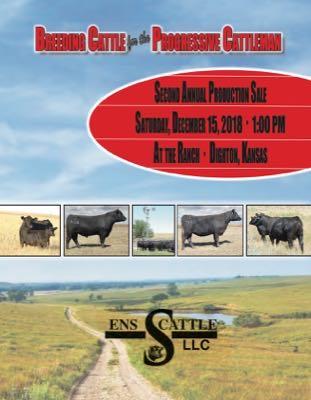 ENS Cattle