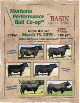 Montana Performance Bull Co-op/Basin Angus Ranch