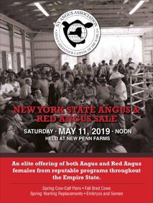 New York State Angus Sale