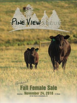 Pine View Angus