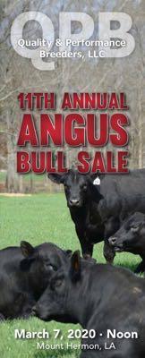 QPB Bull Sale
