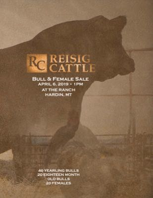 Reisig Cattle