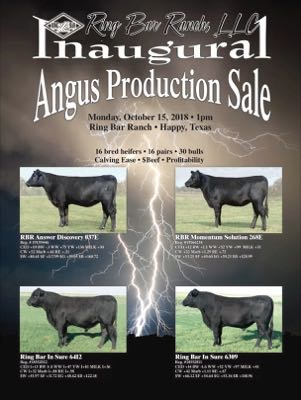 Angus Production Sale
