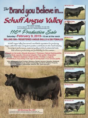 Schaff Angus Valley