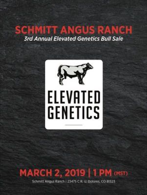Schmitt Angus Ranch