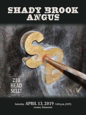 Shady Brook Angus