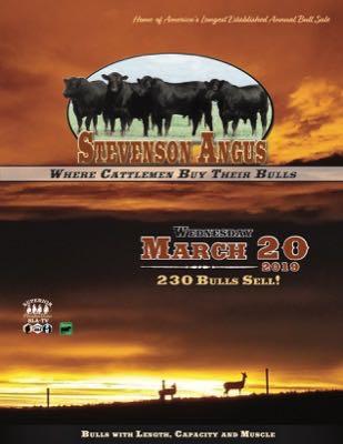 Stevenson Angus Annual Bull Sale Catalog