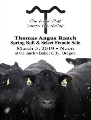 Thomas Angus Ranch
