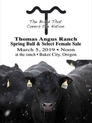 Oregon Bull Sale