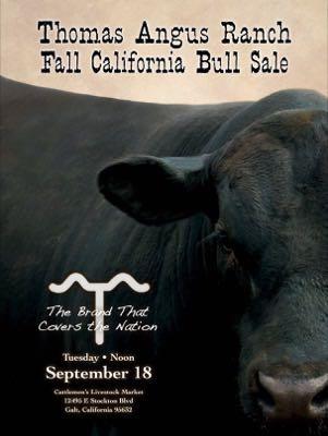September 18, California Bull Sale