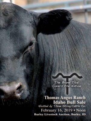 Idaho Bull Sale