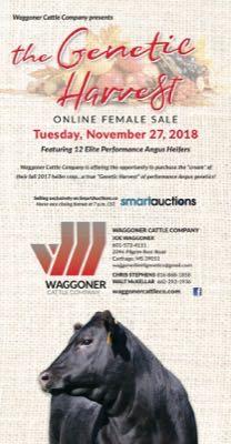Waggoner Cattle Co.
