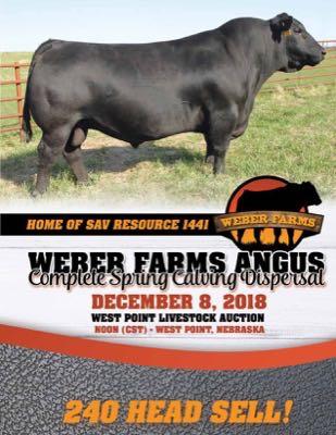 Weber Farms Angus